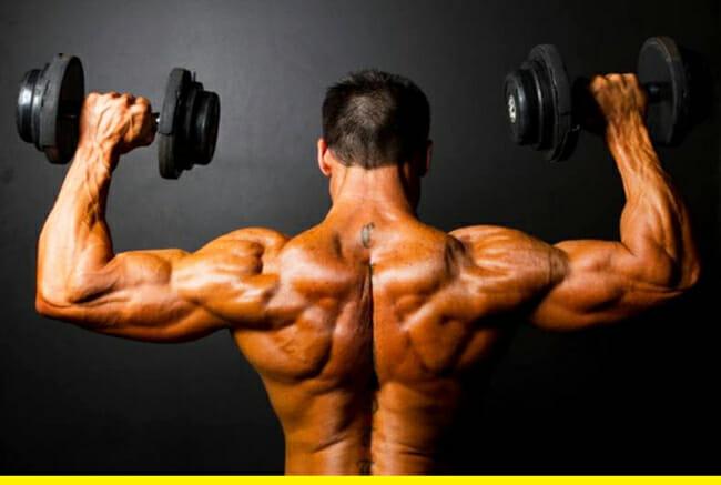 musclee